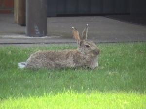 Blick aus der Ferienwohnung: Kaninchen beim Chillen