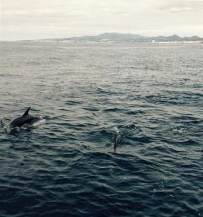 azoren delfine